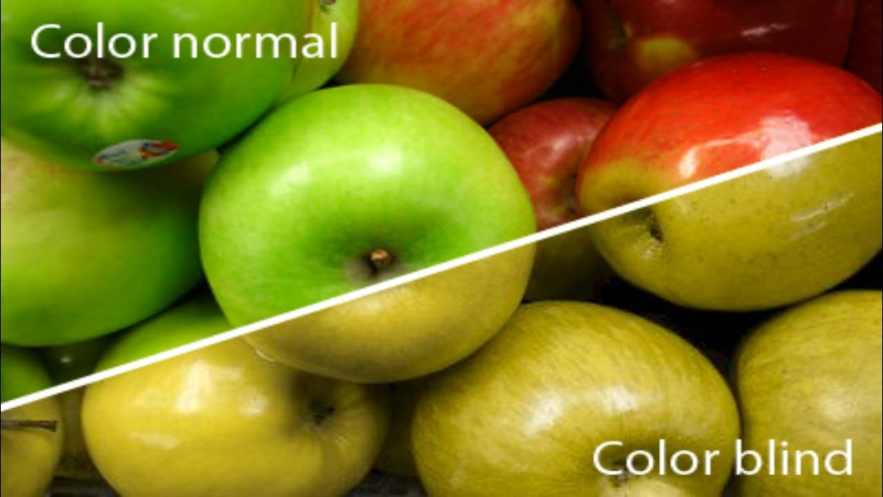 What is colour blindness?   The Petri Dish